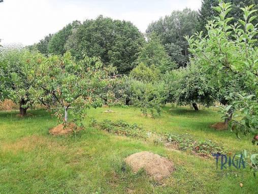 Hořice - pěkná zahrada foto 1